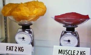 肌肉和脂肪的差異?想不到脂肪這麼容易生成